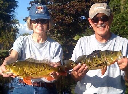 South Florida Peacock Bass Trips